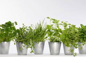 Top 5 des herbes aromatiques préférées