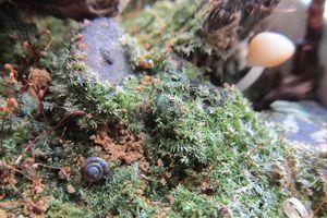 Kleines Biotop