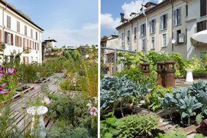 Et si vous transformiez votre toit en jardin