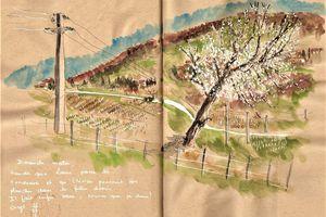 Cerisier en Beaujolais...