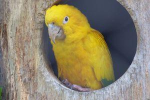 La cornure dorée du zoo des Sables d'Olonne