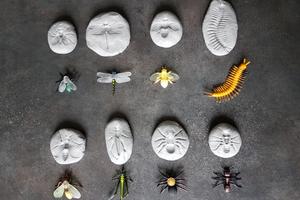 Fossiles de petites bêtes