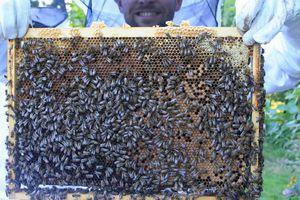 Que se passe-til dans la ruche en AVRIL ???