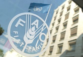 FAO Internship Program 2017