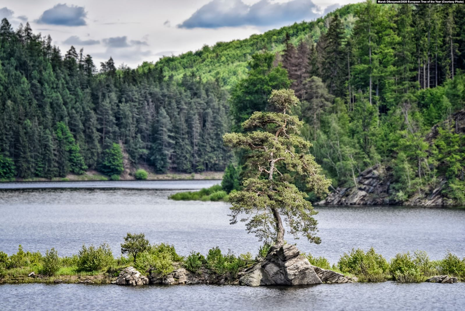 """This 350-year-old Scots pine -- dubbed the Guardian Of The Flooded Village -- was voted European Tree Of The Year for 2020 by the Environmental Partnership Association (EPA) and the European Landowners' Organization. The tree is located near the Czech village of Chudobin, which was flooded due to the construction of a dam. Local legend has it that a devil sits under the tree and plays the violin at night. According to the EPA, the tree """"is not only an important landmark but also an impressive testimony to its high resistance to climate change and human impact."""""""