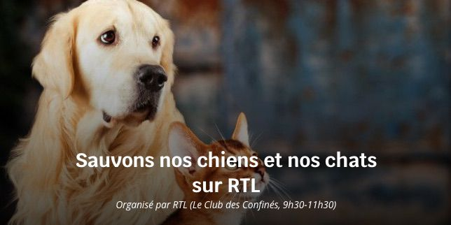 sauvons nos chiens et nos chats