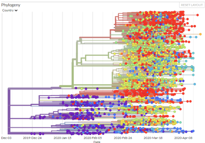 Genomic epidemiology of novel coronavirus - Global subsampling. Maintained by the Nextstrain team. Enabled by data from gisaid-https://nextstrain.org/ncov/global