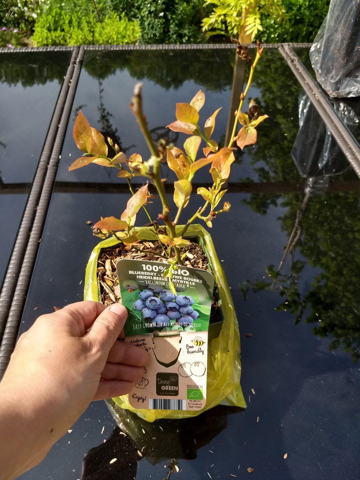 Commande de plantes chez Bakker