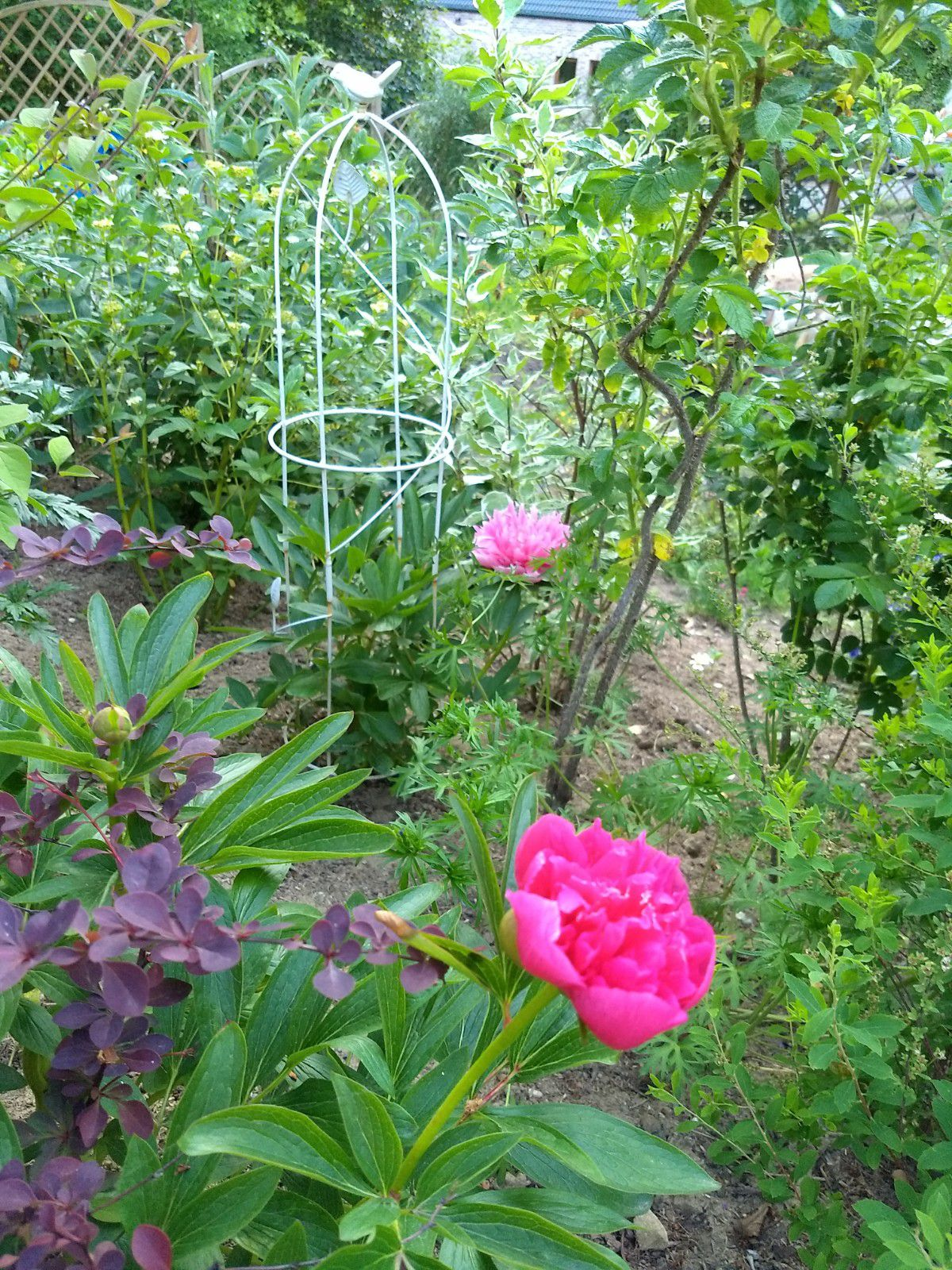 Mon jardin, mon refuge