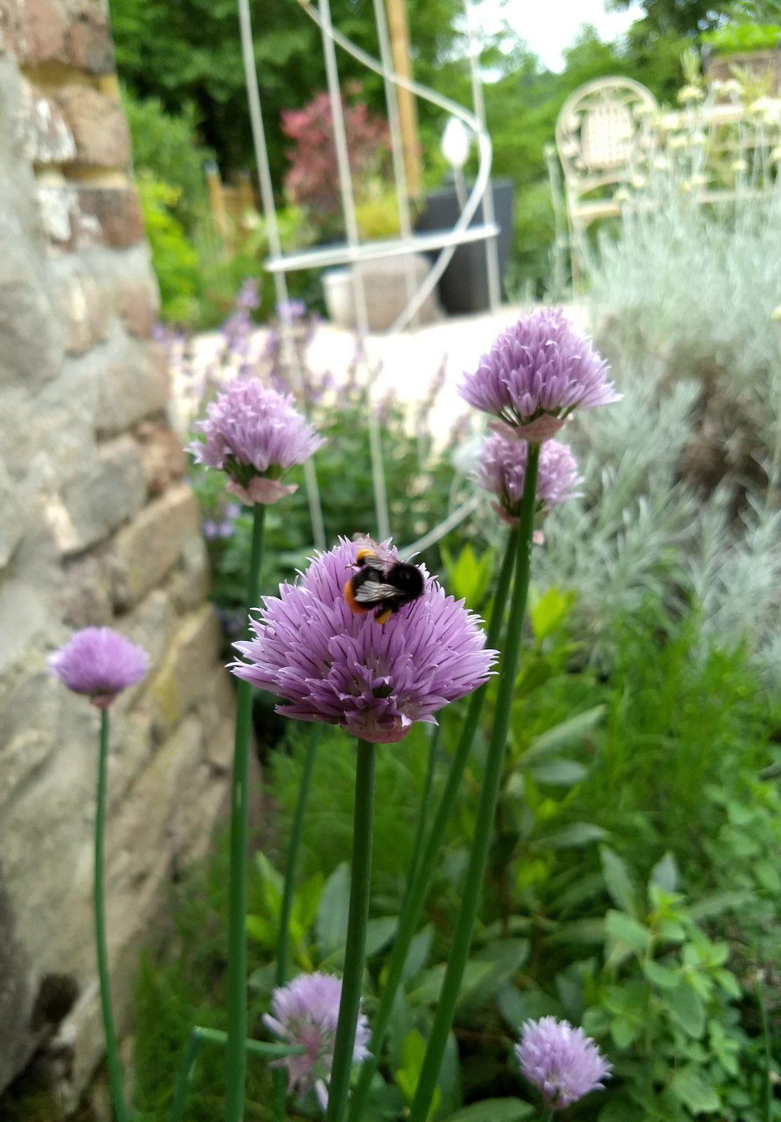 Petit tour au jardin de bon matin