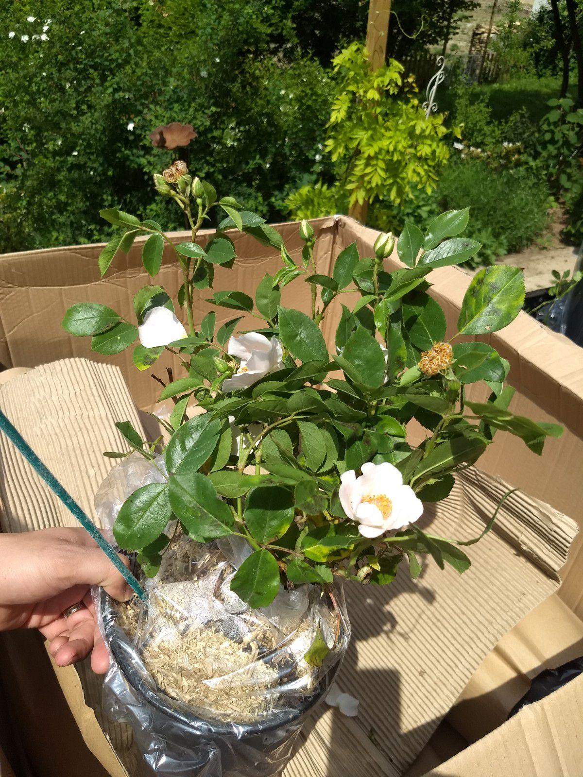 Commande de plantes chez Promesse de fleurs (la suite)