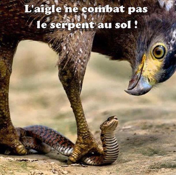 Combat spirituel no1