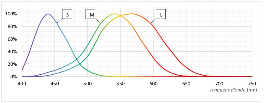 Courbe de réponse des 3 types de cônes