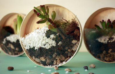 Mini terrarium tendance upcycling !!!