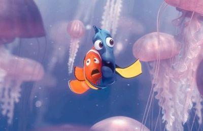 Avertissement : nombre des méduses toujours en augmentation