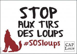 Campagne Stop aux tirs des loups