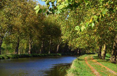 Canal des Vosges ( Gripport-Messein )