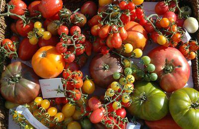 La tomate : un allié santé ?