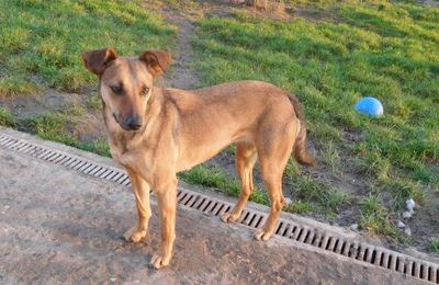 MARS CHIENS A ADOPTER (liste des articles)