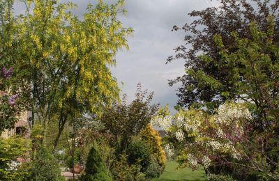 PLuie d'Or sur le jardin des Violettes
