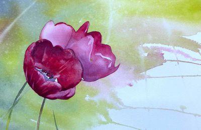 pour Pauline, tulipes pourpres...