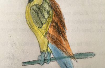 Le perroquet de Hugo