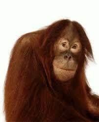 Sommes-nous trop « bêtes» pour comprendre l'intelligence des animaux? Adultes