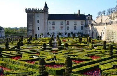 Les tulipes, reines des Jardins du Château de Villandry
