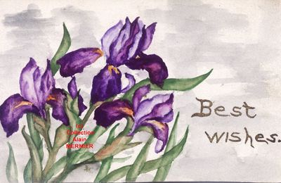 Iris - 1722 - Hand painted. Best wishes. U.S.A 1911