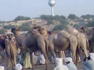 Tchad: communiqué de presse de la communauté Koutra