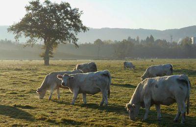 Une jolie fleur dans une peau d'vache(Georges Brassens) Une jolie vache déguisée en fleur...
