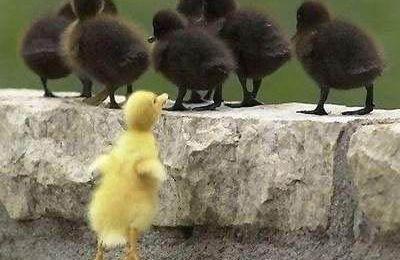 Devoirs de vacances: Le vilain petit canard (fin...)
