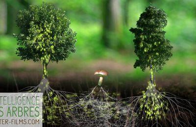 L'intelligence des arbres, le documentaire qui vous fera voir les forêts autrement