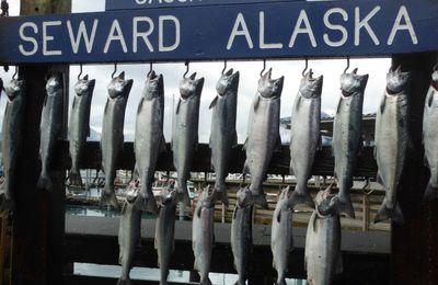La Pêche en Alaska