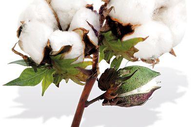 L'affaire du coton ouzbek