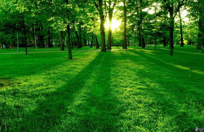 Distribution de TCO collectivités et jardins partagés !