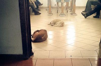 Des chiens errants s'invitent à l'enterrement d'une femme ayant passé toute sa vie à les nourrir...
