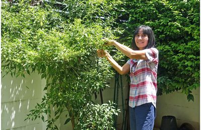 Un arbre à piments.... (Thaïlande)