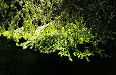 Midi en forêt