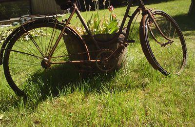 Un vieux vélo dans le jardin....