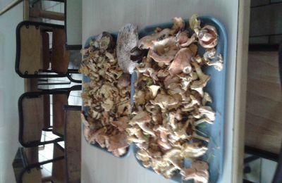 Les champignons de la vallée du Louron