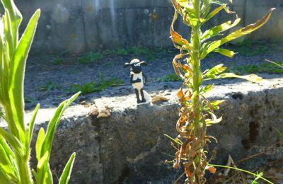 Des moutons vont brouter l'herbe vierzonnaise !