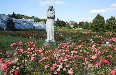 Histoire de roses à Budatétény