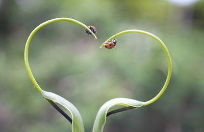 Bonne Saint Valentin à tous les amoureux de la nature !
