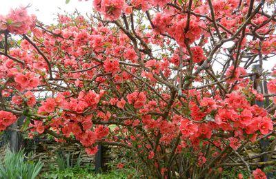 couleur rose pour lundi soleil