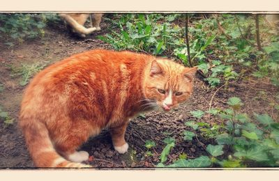 Garfield, personnage de bande dessinée, est sans doute le gros chat orange le plus connu