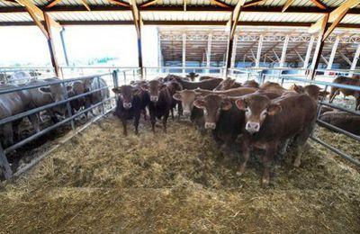 Creuse : Ségolène Royal et Manuel Valls donnent leur feu vert pour doubler la capacité d'accueil de la ferme des 1000 veaux