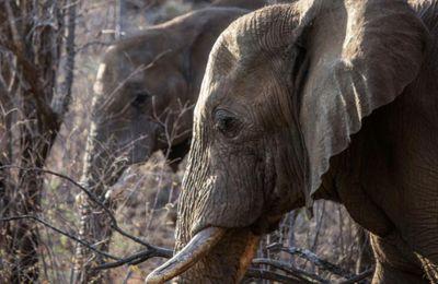 En 40 ans, la terre s'est vidé de la moitié de ses animaux