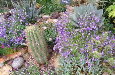 Mon jardin Le Clos fleuri en Mai