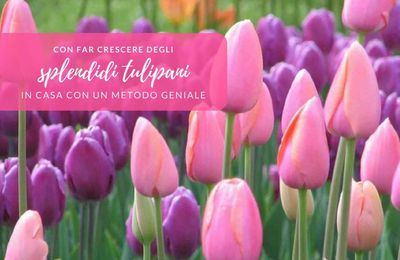 Come far crescere i tulipani in casa con un metodo geniale